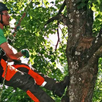 Metsäradio.: Puukiipeilyä ja puiden hoitamista