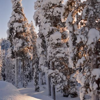 Metsäradio.: Maa- ja metsätalousministeri Jari Leppä Metsäradion vieraana