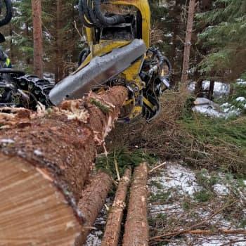 Metsäsektori on maan talouden kivijalka