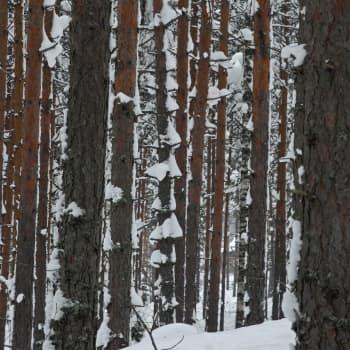 Lieksan seurakunnan metsässä