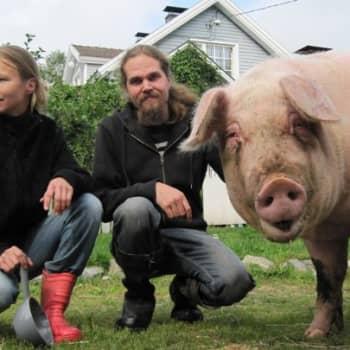 YLE Tampere: Utun tallin eläimet saavat juosta vapaana