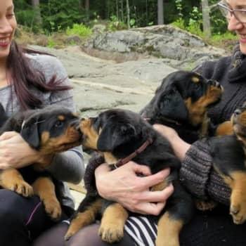 YLE Tampere: Kylässä kennelissä: Koiranpentujen hoitaminen on kokopäivätyötä