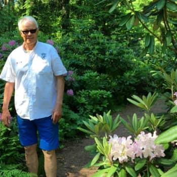 Erkki Frick raivasi takapihalleen paratiisin - eläköityneen pankinjohtajan metsässä kukkii nyt 800 alppiruusua