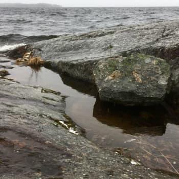 Pärjääkö sammakonkutu keskellä rantakalliota ja räntäsateessa?