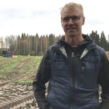 Tuomolan perheyrityksestä tulee joka vuosi kilo porkkanaa per suomalainen