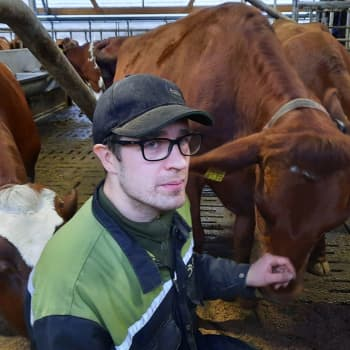 Valiolaisilla maidontuottajilla alkaa uusi sopimustuotannon aika