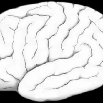 Hermoston kantasolut aivosairauksien tutkimuksen ja hoidon apuna