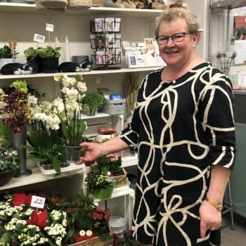 Viherkasvit käyvät kaupaksi - Hoitoneuvoja ei kukkakaupassa pantata, oli kasvi ostettu mistä tahansa