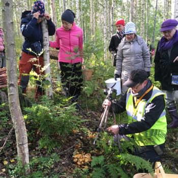 Sieniristeilyllä Savonlinnan Kokonsaaressa ja Tuohisaaressa