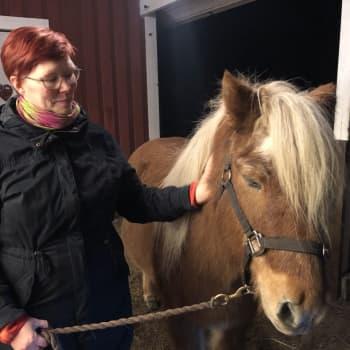 Hevoset auttavat väkivallan uhreja keskustelemaan kokemuksistaan ja voimaantumaan MinD-hevostoiminnassa