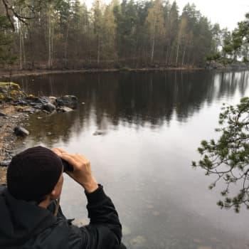 Sulosaaren norppa on jo tuttu näky Savonlinnassa