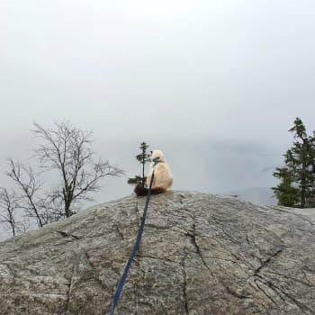Reissukissa Pessi on kansallispuistokonkari