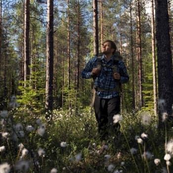 Kimmo Ohtosen metsä elää