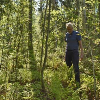 Luonto-Suomi.: Heleänvihreitä sävyjä maisemassa