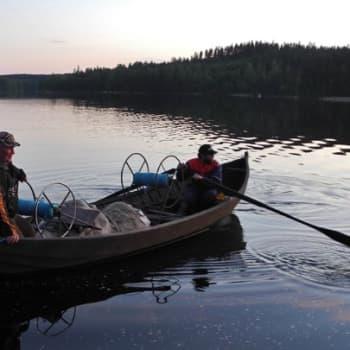 Luonto-Suomi.: Rantanuottausta Saimaalla