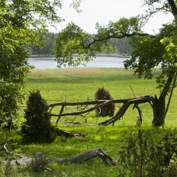 Luonto-Suomi.: Suomen luonnon kauneus - kertomuksia luonnostamme
