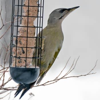 Luonto-Suomen talviruokintailta