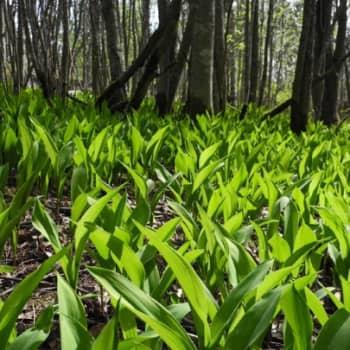 Luonto-Suomi.: Katsele, kuuntele kevättä