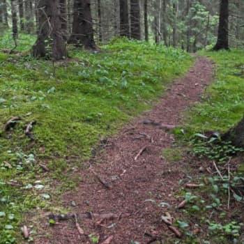 Luonto-Suomi.: Katoavat metsäpolut