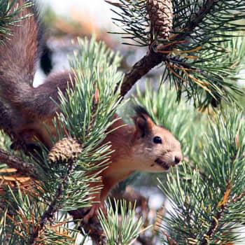 Luonto-Suomi.: Luonto-ohjelmien vuosi