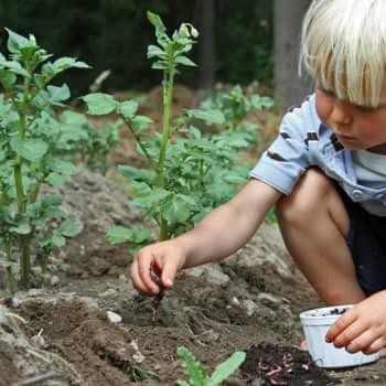 Luonto-Suomi.: Luonto terveydeksi