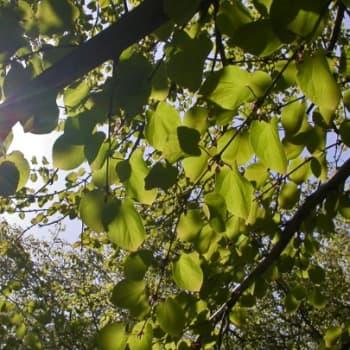 Luonto-Suomi.: Lehto on elämän kehto