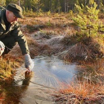 Luonto-Suomi.: Soiden ennallistaminen