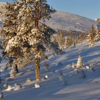 Luonto-Suomi.: Lumi-ilta