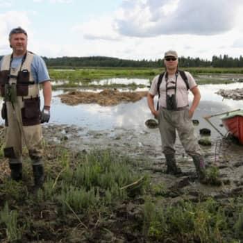 Luonto-Suomi.: Lokkisaari kunnostettiin linnuille