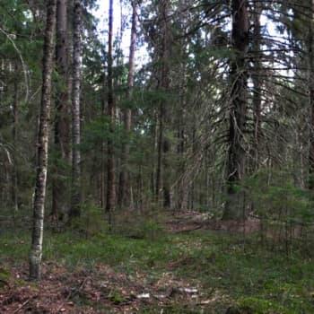 Luonto-Suomi.: Luonto-Suomen metsätähtiä
