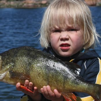 Luonto-Suomen ahvenilta