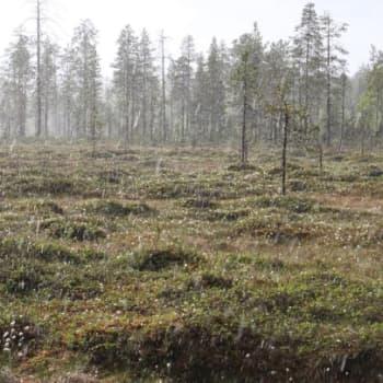 Luonto-Suomi.: Koillismaan luonto