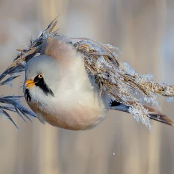 Luonto-Suomi.: Lintujen talvi