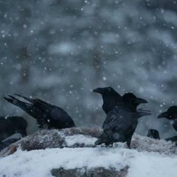 Teemaillat: Suomen luonnon talvi-ilta