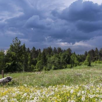 Teemaillat: Lentävä lainapeite ja kolme aurinkoa taivaalla - kuuntelijoiden kysymyksiä ja havaintoja kesäsäästä