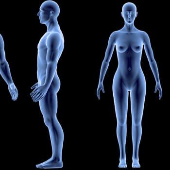 Tiedeykkönen: Biologiassa sukupuoliraja on häilyvä