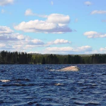 Suomen uusin 12. meteoriittikraatteri löytyi Keski-Suomesta Summasesta. Miten tunnistaa kiviä?