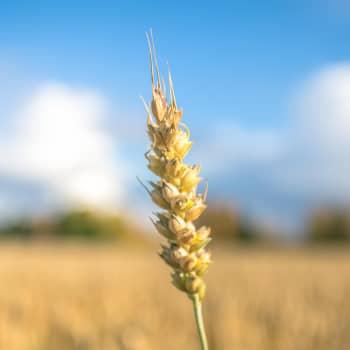 Sopeutuminen ilmastonmuutokseen voi tehdä maanviljelijöistä tulevaisuuden ilmastosankareita