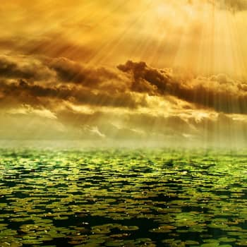 Tiedeykkönen: Suorat aurinkobiopolttoaineet mullistavat energiantuotannon