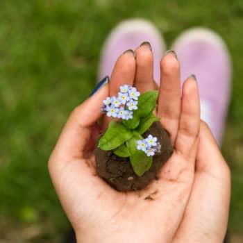 Liisa Akimof: Puutarhatöiden suurin viehätys on näteissä riveissä nousevat, vihreän erisävyiset taimien alut