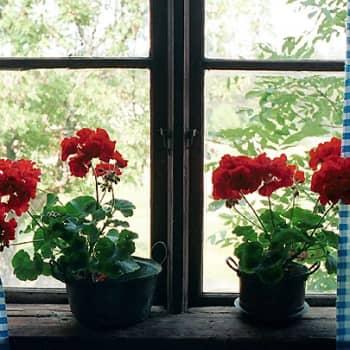 Puheen Iltapäivä: Talotohtori: Asumisen pitäisi olla terveellistä, tuttua, viihtyisää ja kaunista kuten ennen
