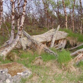 Čoavččesjávrri ja Giellánjárgga dálut ja dološ ássan, 1990 ja 1991