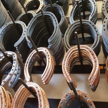 Hevonen kuluttaa kymmenet kengät elämänsä aikana - hevosellakin voi kenkä hiertää