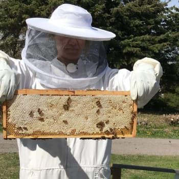 Hur ska vi rädda pollinerarna?