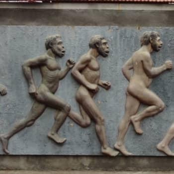 Ajankohtainen Ykkönen: Miksei evoluutioon uskota?