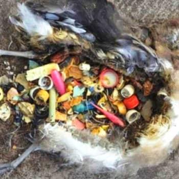 Vuonna 2050 merissämme arvioidaan olevan enemmän muovia kuin kalaa, jos nykymeno jatkuu.