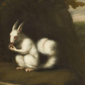 Montako tuoppia saa yhdellä mytologisella oravannahalla?