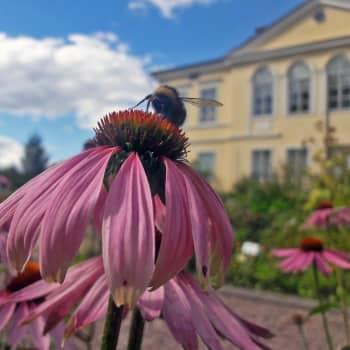Radio Suomi juhlii Suomen luonnon päivää