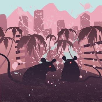 Caracasin hiiret