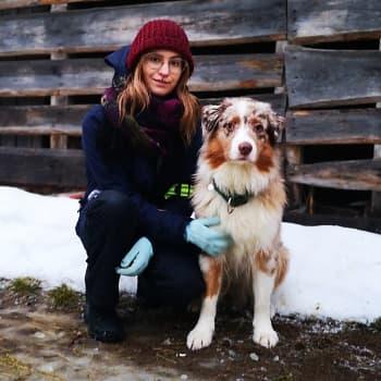 Koirapaimennuksen suosio on kasvanut – paimennuksen myötä myös koiran ja omistajan suhde tiivistyy